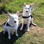 Iko und Kyra